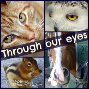 story through an animal's perspective