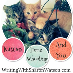 homeschooling kitties