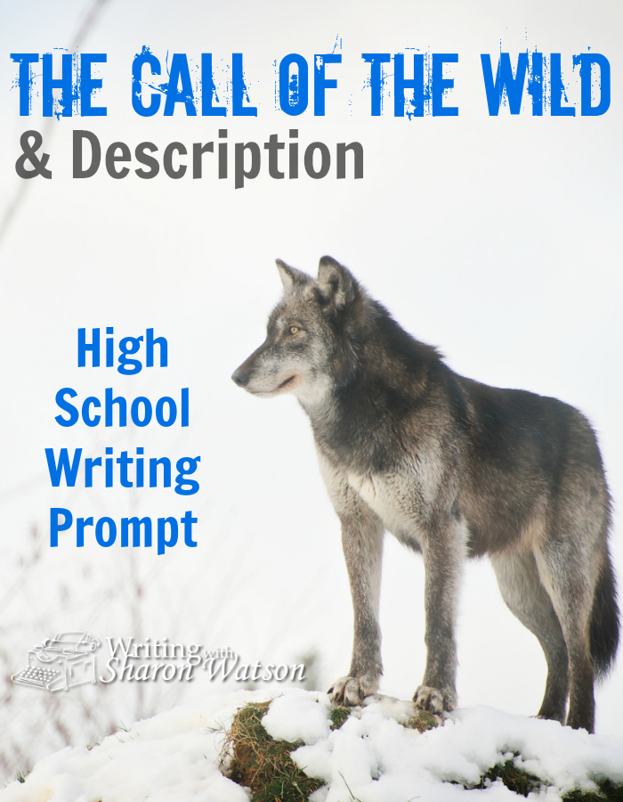 High School Writing Prompt -- The classics can teach us much about writing. This example from Jack London's The Call of the Wild shows how to use the senses and reactions in descriptions.
